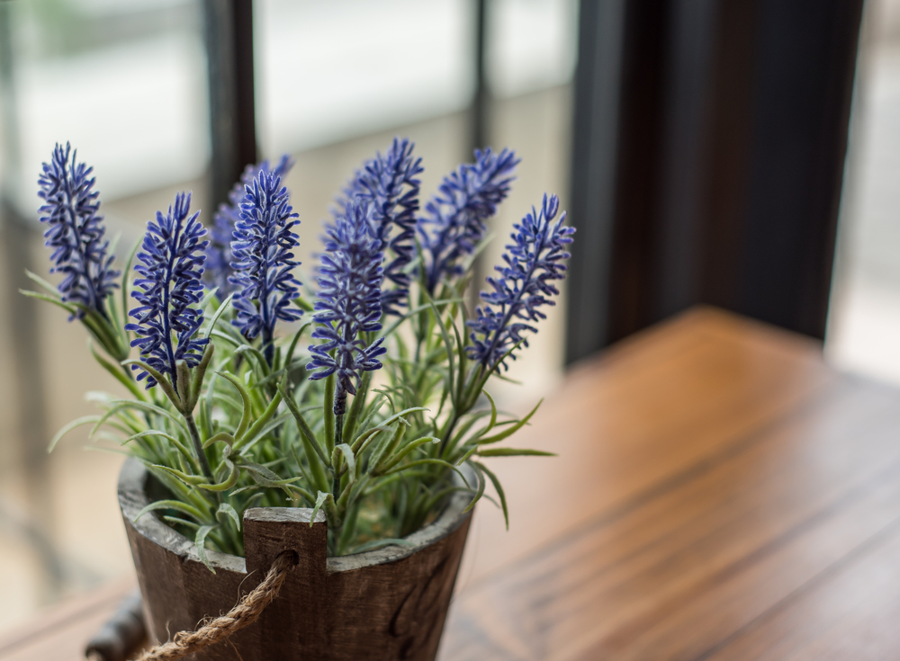 lavender plant benefits in home