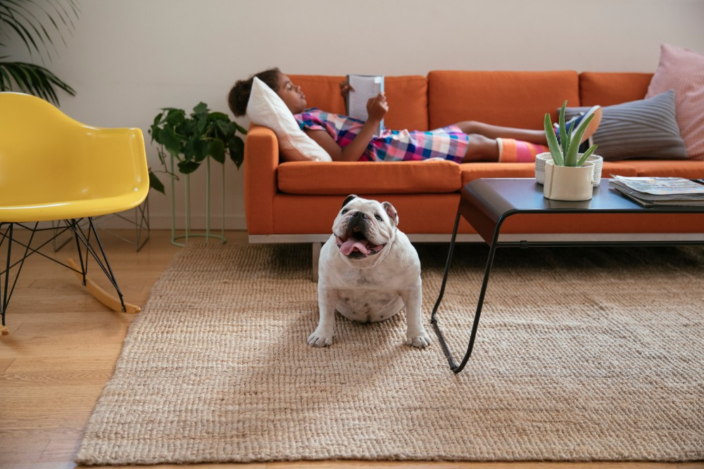 girl dog living room