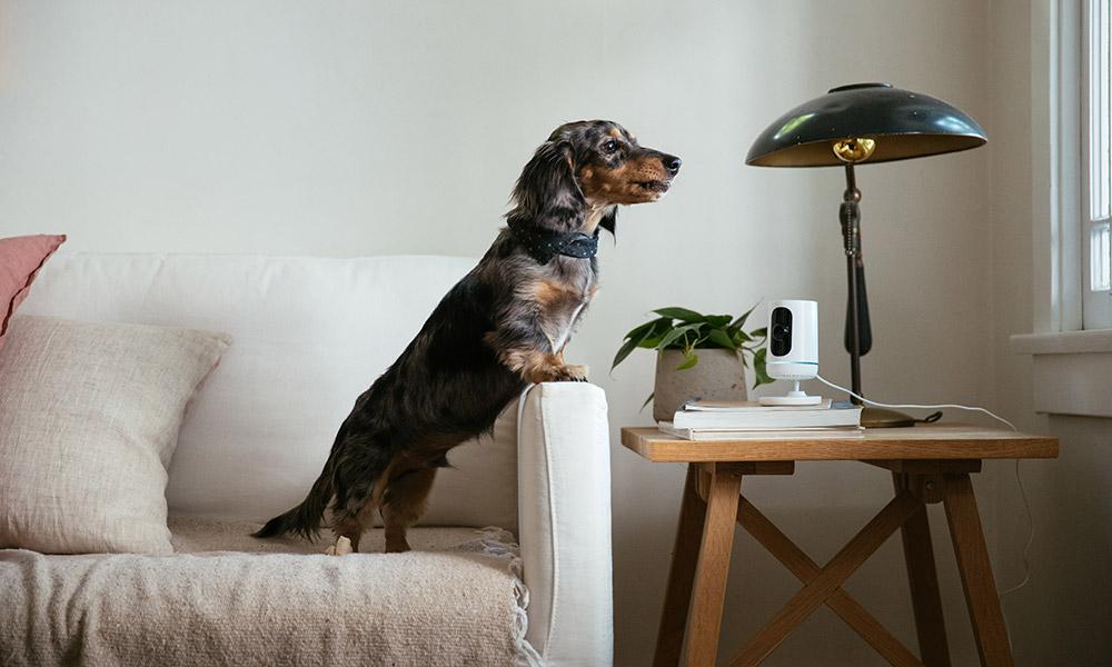 Dog and Indoor Camera